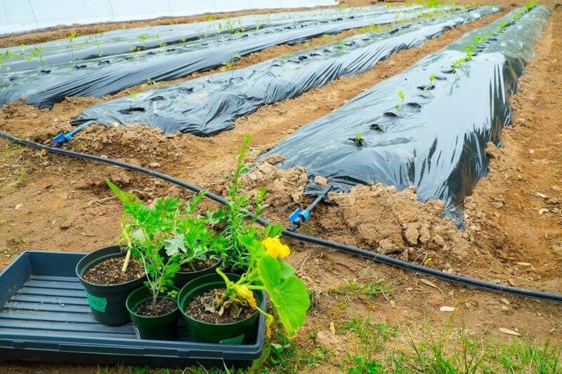 Garden Supplies 3